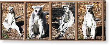 Funny Lemurs Canvas Print by Svetlana Sewell