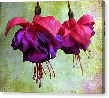 Fuschia Canvas Print by Jessica Jenney