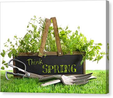 Garden Box With Assortment Of Herbs And Tools Canvas Print by Sandra Cunningham