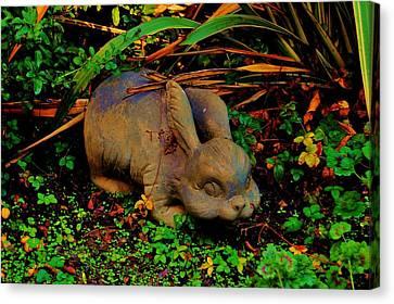 Garden Bunny Canvas Print by Helen Carson