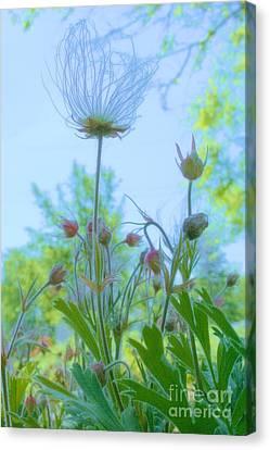 Garden Crowd Canvas Print by Julie Lueders