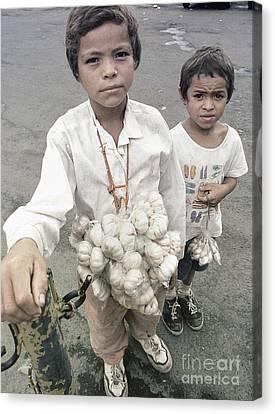 Garlic Boys Canvas Print by JS Stewart