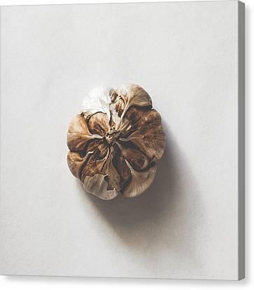 Kitchen Decor - Garlic Canvas Print by Kate Morton