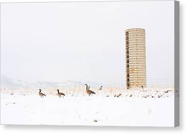 Geese In The Snow With Silo Canvas Print by James BO  Insogna