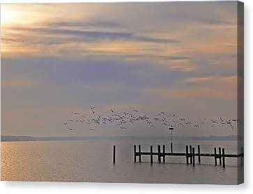 Geese Over The Chesapeake Canvas Print by Bill Cannon