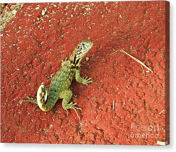 Geico Canvas Print by Vesna Antic