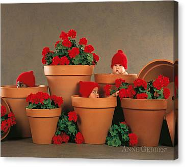Geranium Pots Canvas Print by Anne Geddes