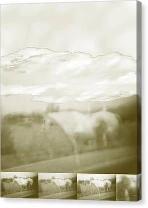 Ghost Horse Colorado Canvas Print by Ann Tracy
