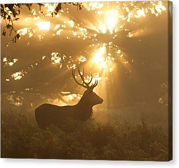 Ghost Of The Forest Canvas Print by Greg Morgan
