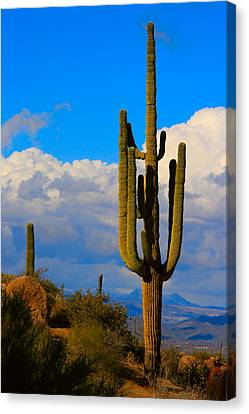 Giant Saguaro In The Southwest Desert  Canvas Print by James BO  Insogna