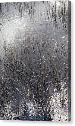Glades 2 Canvas Print by Richard Smukler