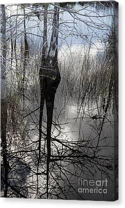 Glades 5 Canvas Print by Richard Smukler