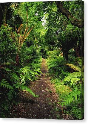 Glanleam, Co Kerry, Ireland Pathway Canvas Print by The Irish Image Collection