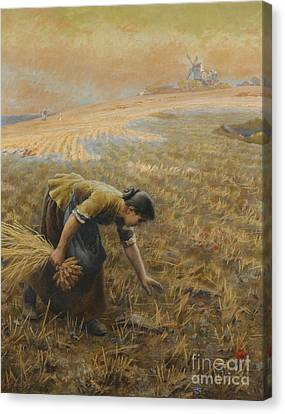 Gleaning Canvas Print by Celestial Images