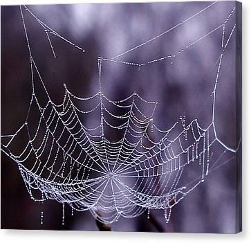 Glistening Web Canvas Print by Karol Livote