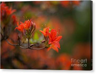 Glorious Blooms Canvas Print by Mike Reid