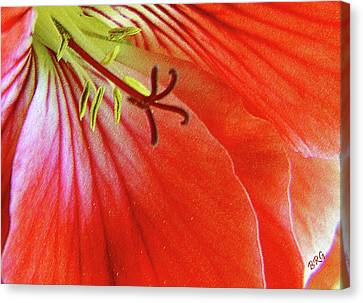 Glorious Geranium Canvas Print by Ben and Raisa Gertsberg