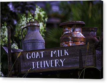 Goat Milk Delivery Canvas Print by Garry Gay