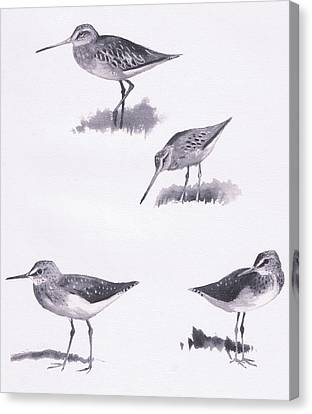 Godwits And Green Sandpipers Canvas Print by Archibald Thorburn