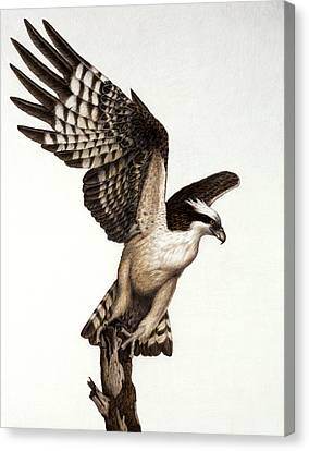 Going Fishin' Osprey Canvas Print by Pat Erickson