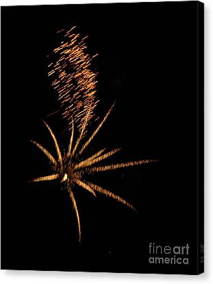 Gold Star Tail Canvas Print by Norman  Andrus