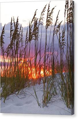 Golden Amber Canvas Print by Janet Fikar