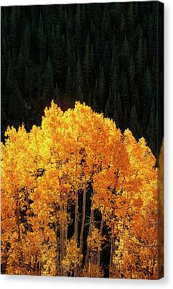 Golden Autumn Canvas Print by Andrew Soundarajan