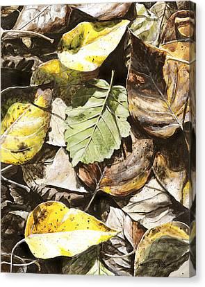 Golden Autumn - Talkeetna Leaves Canvas Print by Karen Whitworth