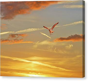 Golden Flight Canvas Print by Adele Moscaritolo