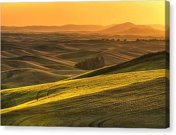 Golden Grains Canvas Print by Mark Kiver