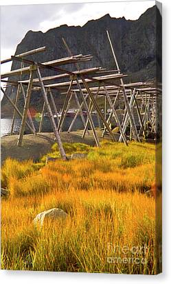 Golden Gras And Fish Drying Rack Canvas Print by Heiko Koehrer-Wagner