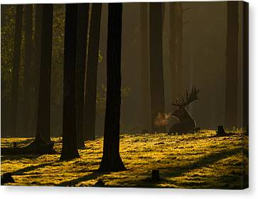 Golden Hour Canvas Print by Andy Luberti