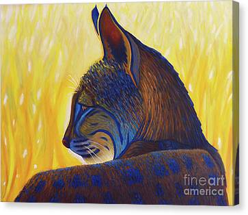 Golden Hour Bobcat Canvas Print by Brian Commerford