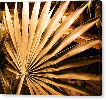 Golden Palm Canvas Print by Mindy Newman