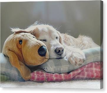 Golden Retriever Dog Sleeping With My Friend Canvas Print by Jennie Marie Schell