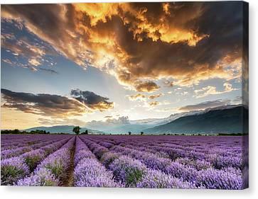 Golden Sky, Violet Earth Canvas Print by Evgeni Dinev