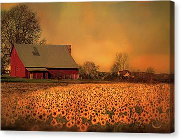 Golden Sunflower Harvest Canvas Print by Theresa Campbell