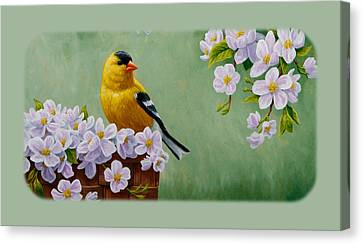 Goldfinch Iphone Case H1 Canvas Print by Crista Forest