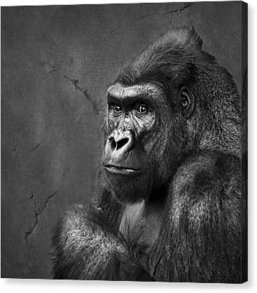 Gorilla Stare - Black And White Canvas Print by Nikolyn McDonald