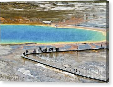Grand Prismatic Spring Canvas Print by Teresa Zieba