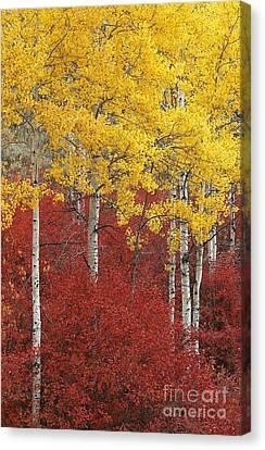 Grand Teton Viii Canvas Print by John Blumenkamp