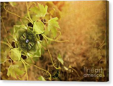 Grape Commodity Canvas Print by Patricia Griffin