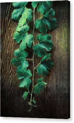 Grape Leaves Canvas Print by YoPedro