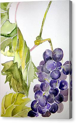 Grape Vine Canvas Print by Mindy Newman