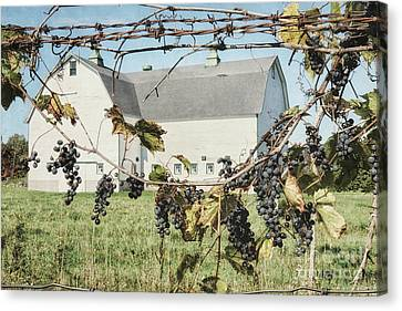 Grapevine Canvas Print by Alison Sherrow I AgedPage