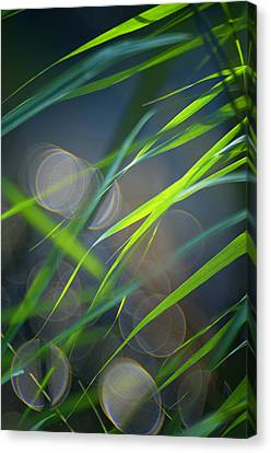 Grass And Evening Light Canvas Print by Silke Magino