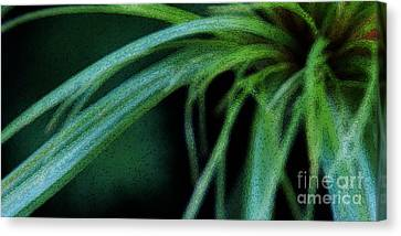 Grass Dance Canvas Print by Linda Knorr Shafer