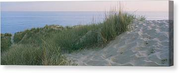 Grass On A Sand Dune, Indiana Dunes Canvas Print by Panoramic Images