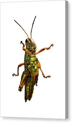 Grasshopper II Canvas Print by Gary Adkins