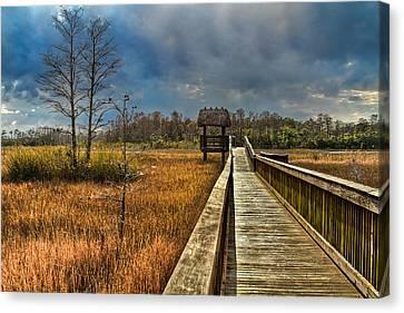 Grassy Glades Canvas Print by Debra and Dave Vanderlaan